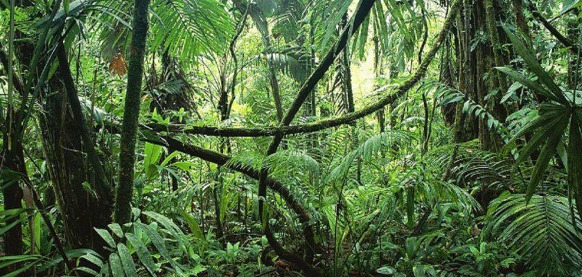 Deep-Jungle-Kratom