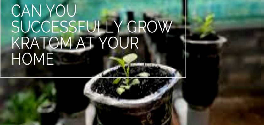 grow kratom