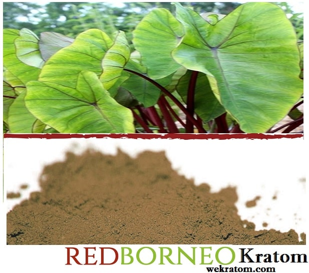 borneo red kratom