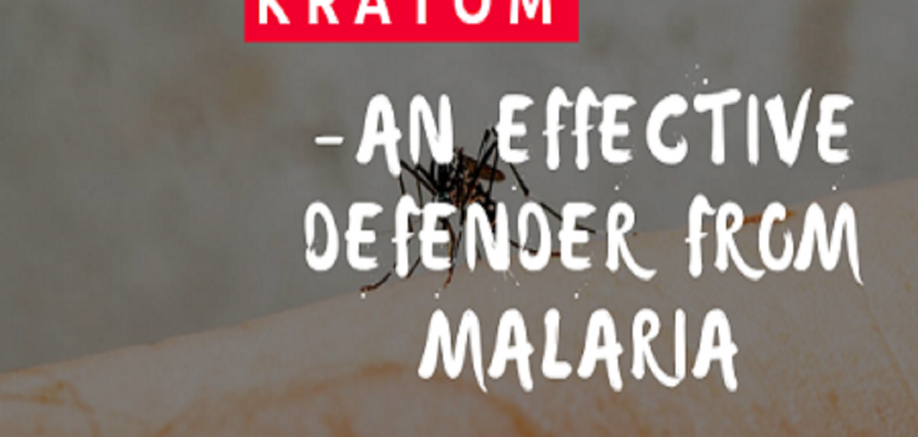 Kratom-An-Effective-Defender-From-Malaria