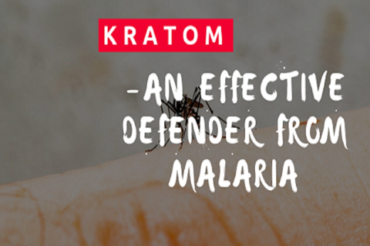 Kratom-An Effective Defender From Malaria