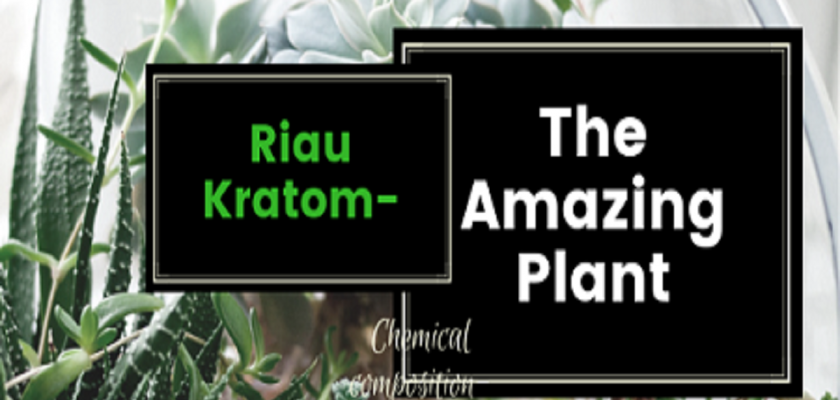 Riau-Kratom-The-Amazing-Plant