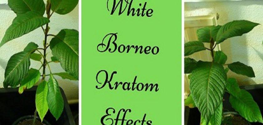 White-Borneo-Kratom-Effects