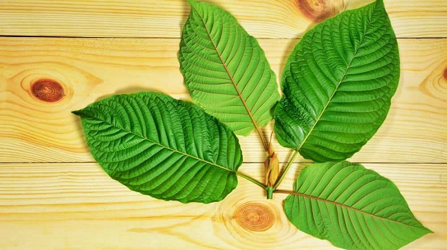 natural kratom effects