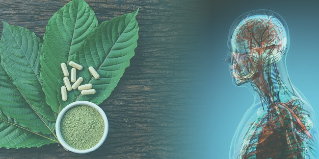 How-long-does-a-kratom-stay-in-your-system