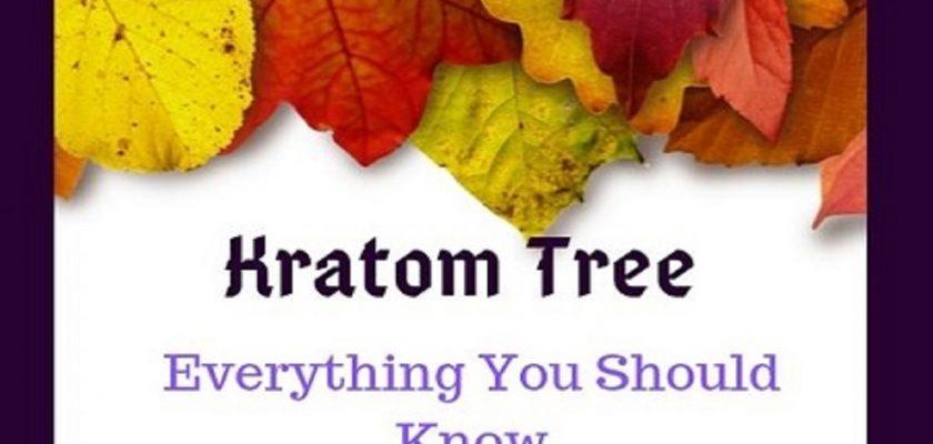 Kratom-Tree