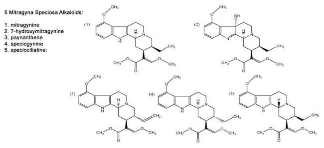 Speciogynine